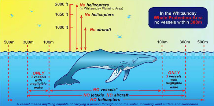 whale_distance_regulations